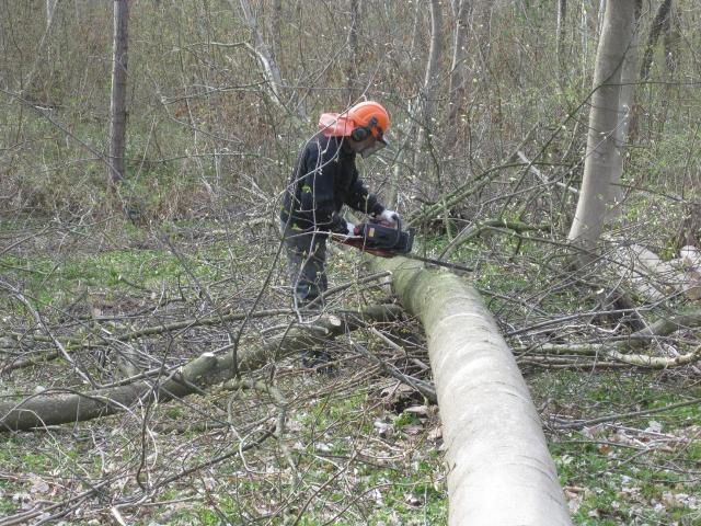 Skoven ryddes