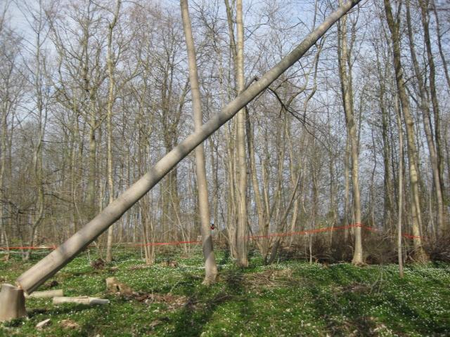 Timber .............